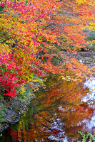 Maine stream in Autumn